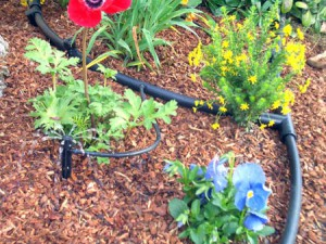 Drip%20in%20Flower%20Beds